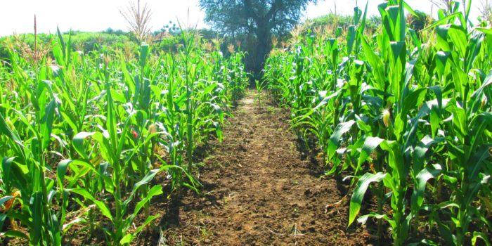 4 - Agric Cluster (2)